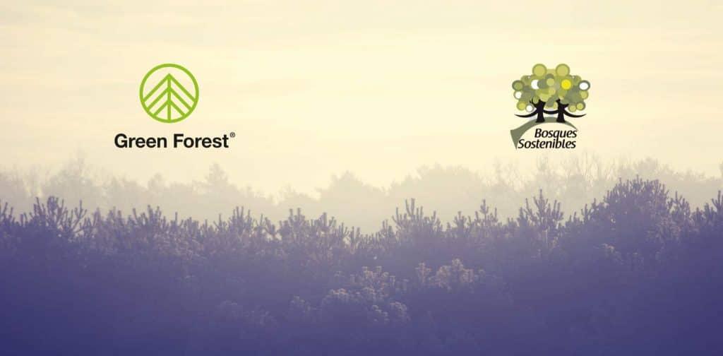 green forest y bosques sostenibles reforestación cantabria
