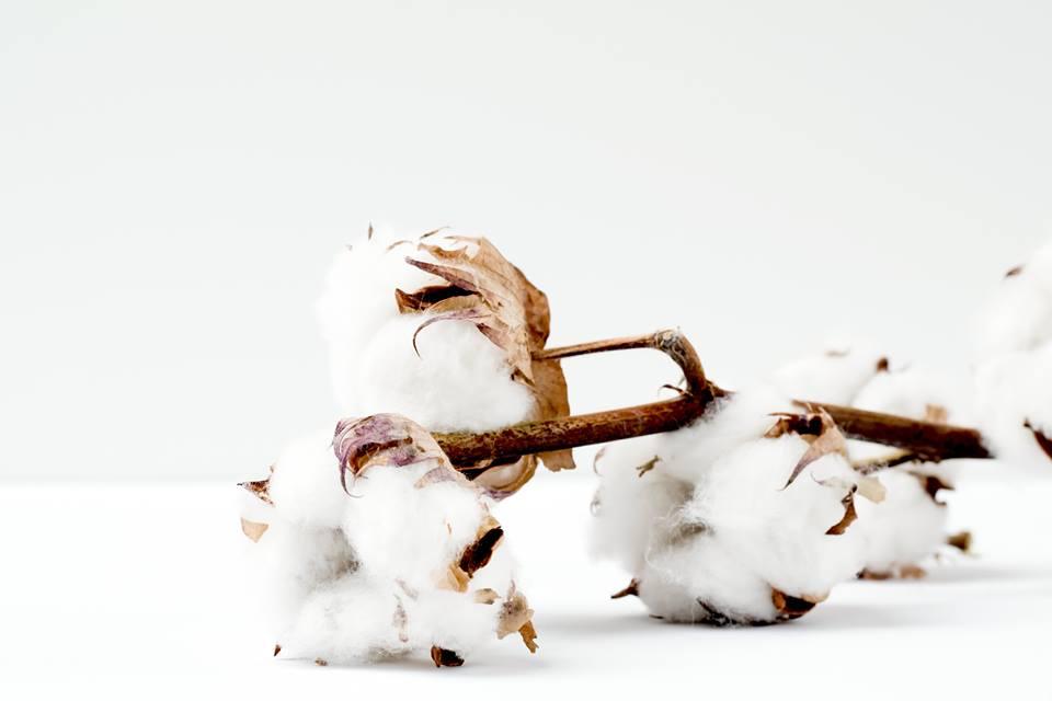 Utilizamos algodón orgánico en todas nuestras prendas