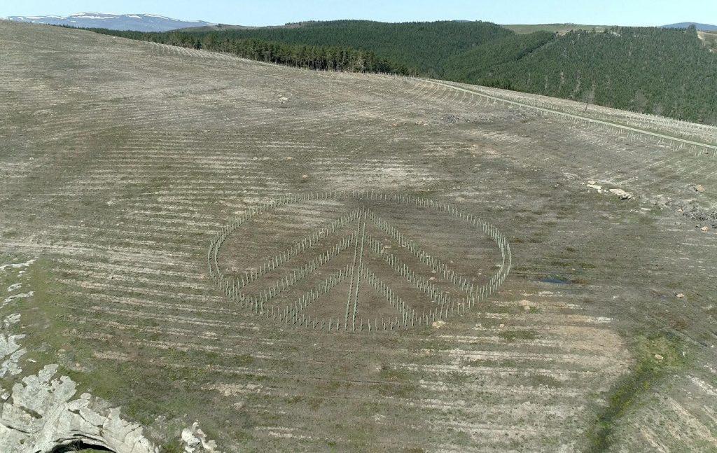 Reforestación green forest wear. Logo marca española a vista de pájaro por bosques sostenibles