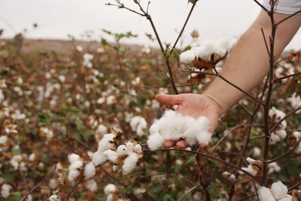 cultivo de algodón orgánico, beneficios para los agricultores, la tierra
