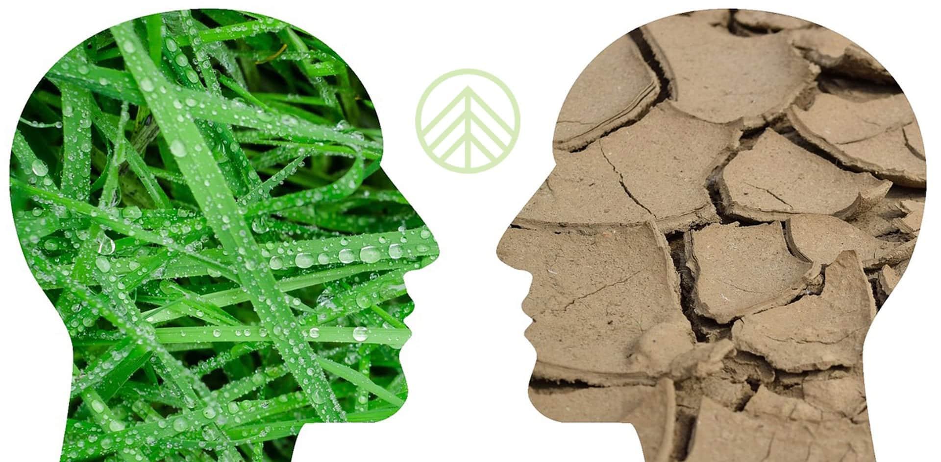 cómo ser sostenible