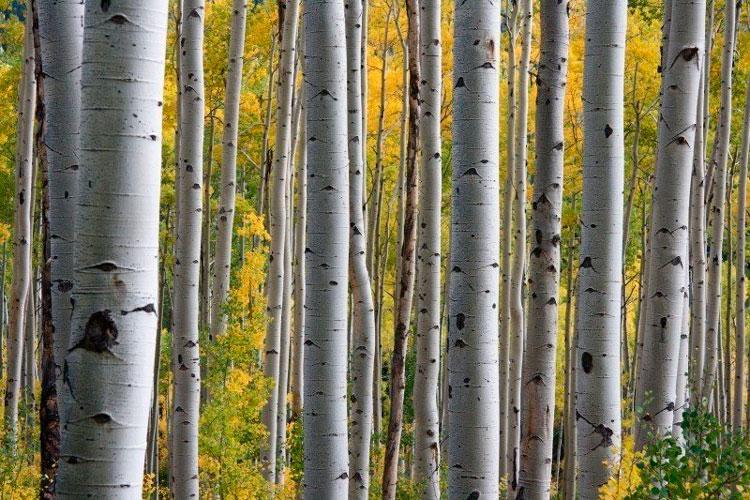 reforestaciones para evitar calentamiento global