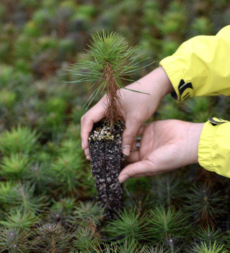 reforestación green forest wear contra el cambio climático