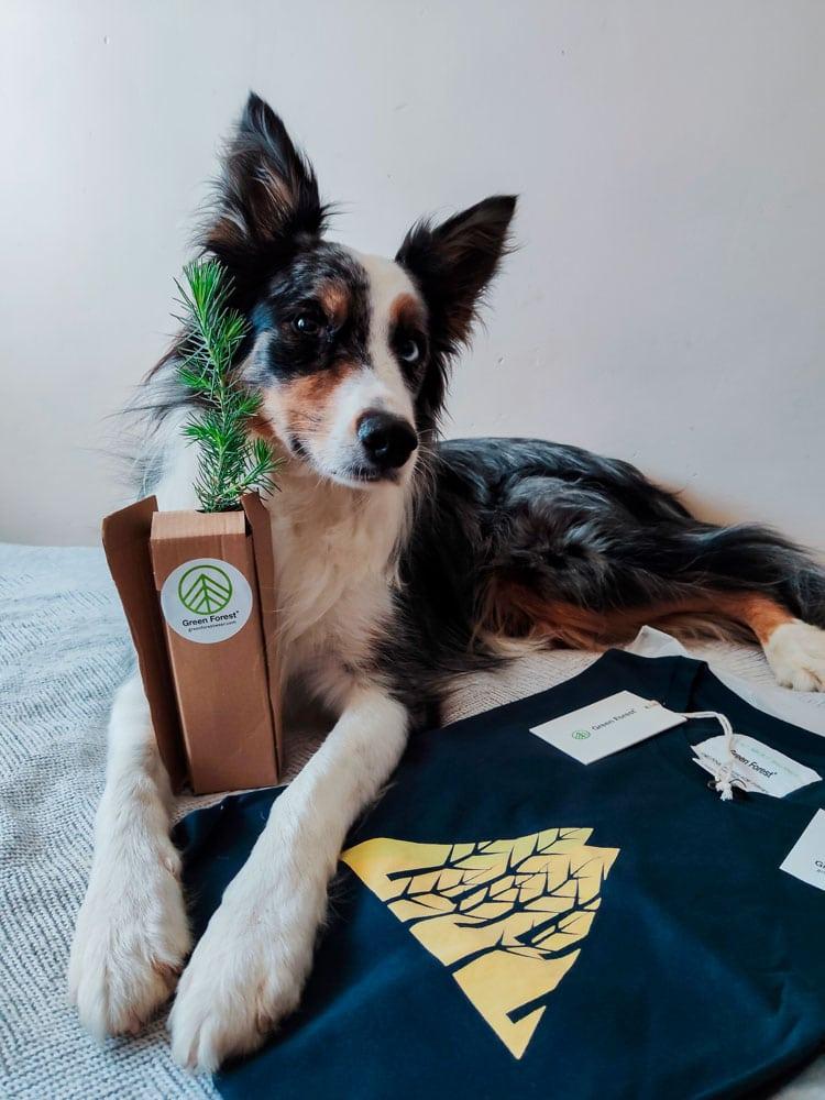 Nuestro cliente favorito Green Forest Wear con su árbol de regalo
