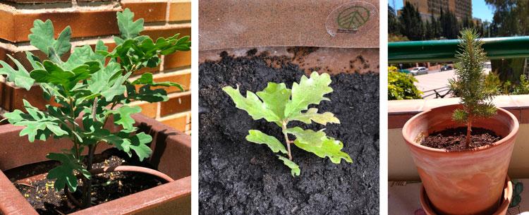 Planta un árbol con los árboles de regalo Green Forest Wear