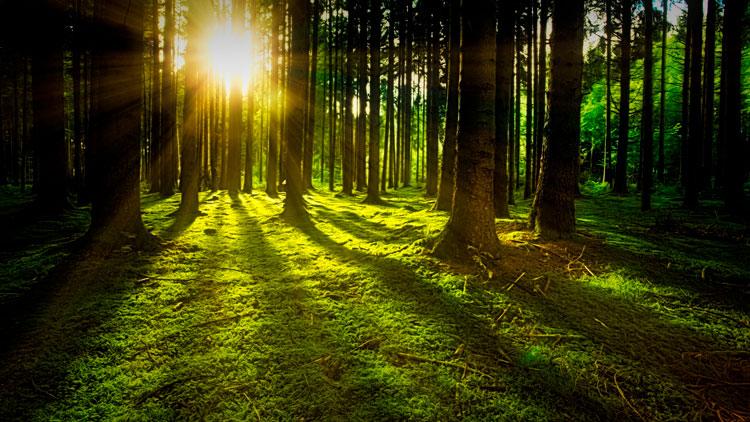 Reforestaciones contra el cambio climático. El amor de Green Forest Wear por los bosques