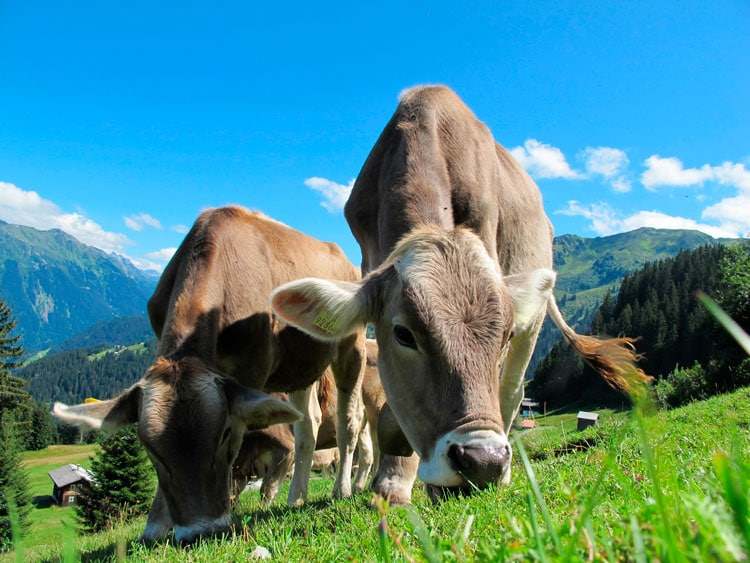 Las montañas dan cobijo a un cuarto de los animales terrestres