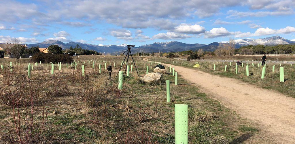 Primera edición de la reforestación #YoTambienMePlanto Green Forest
