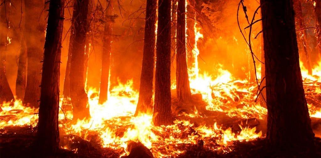 Bosque ardiendo por los incendios en Australia