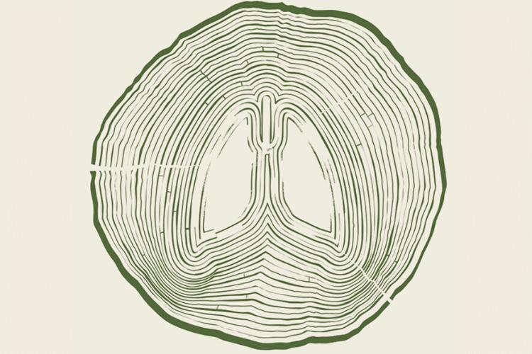 los árboles como medida eficaz contra el cambio climático