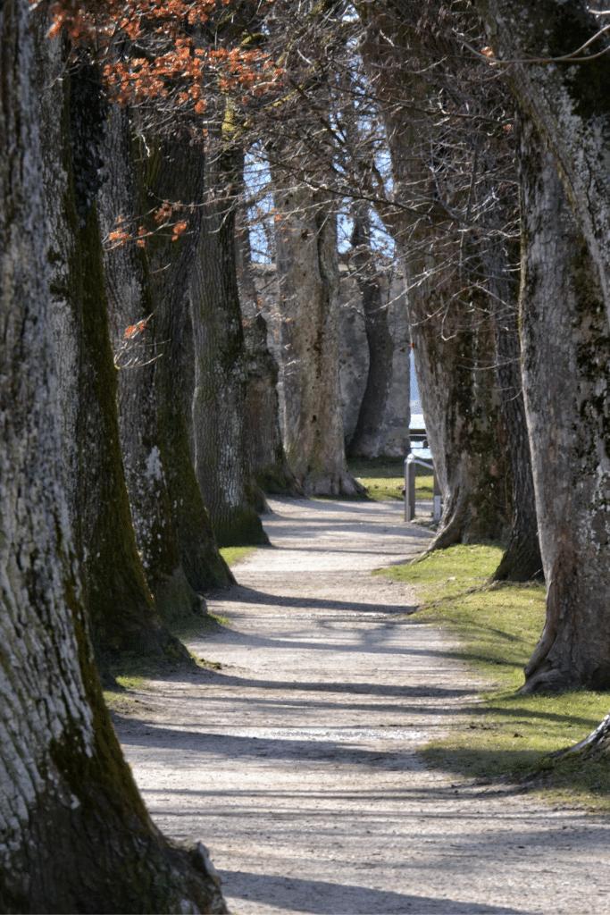 tu árbol green forest, los árboles para combatir el calentamiento global