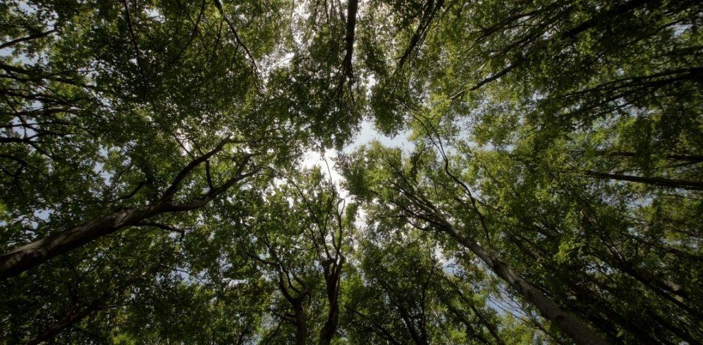 Día Internacional de los Bosques Green Forest Wear